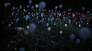 WOSU_Bruce Munro Light2