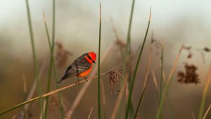 Audubon New Mexico