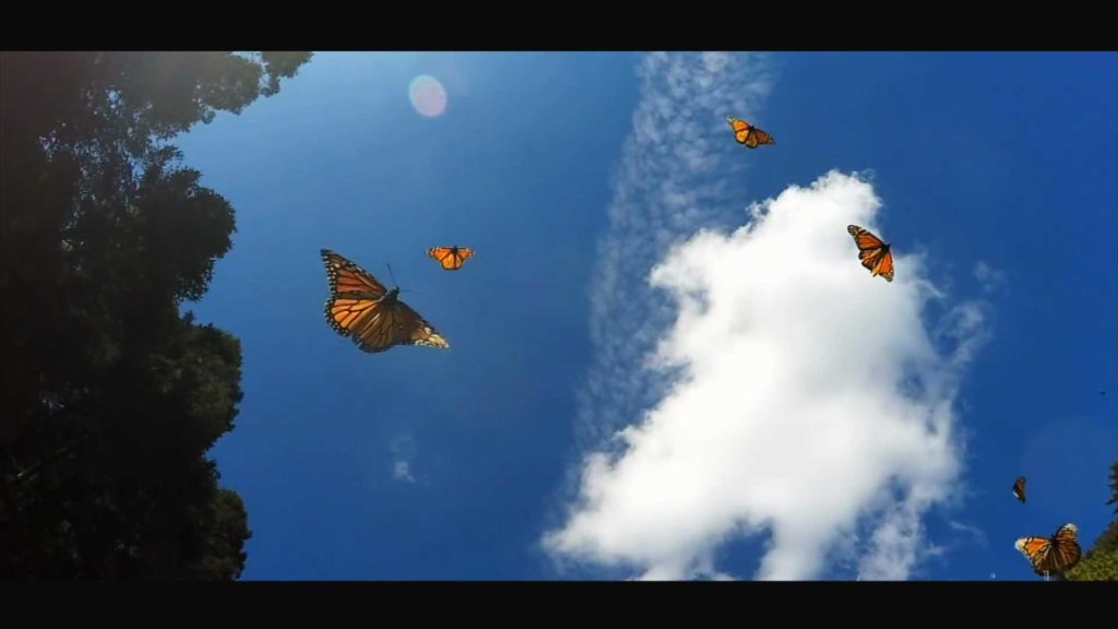 Monarch Butterflies in New Mexico