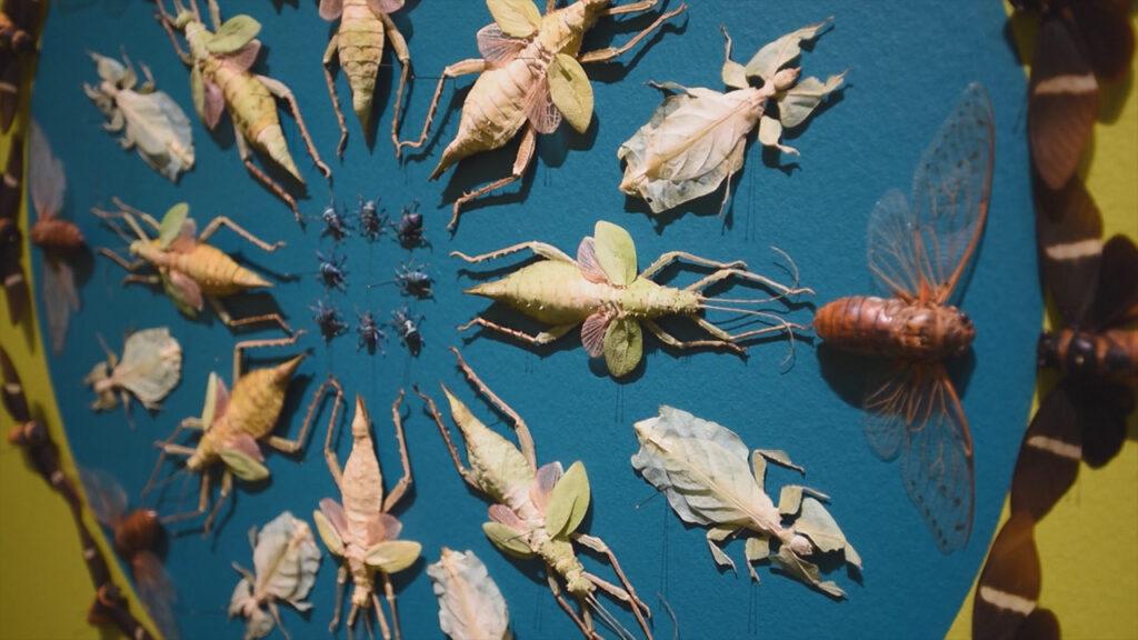 insect art jennifer angus