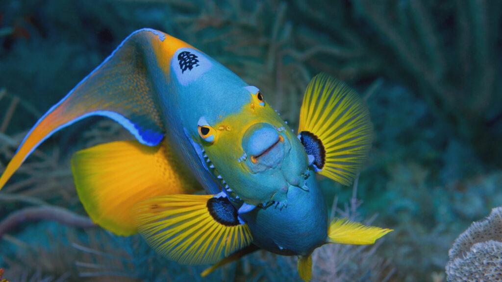 Stephen Frink's Underwater Photography