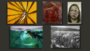 Five pieces of student art ranging from paintings to photographs