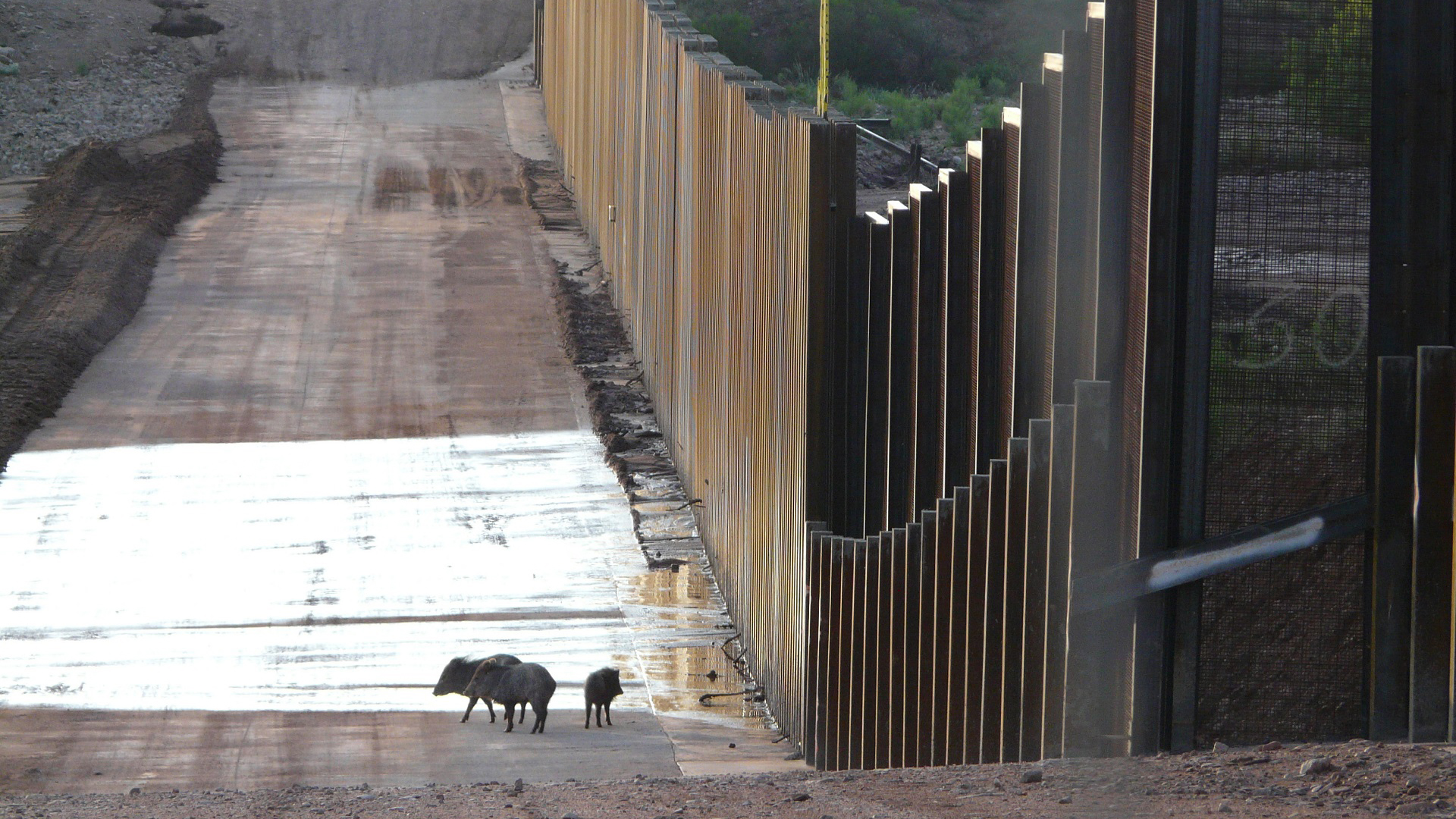 NMiF: Wildlife and the Border Wall