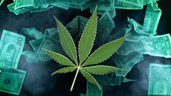 1231 Cannabis Money