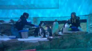 ABQ BioPark Penguins