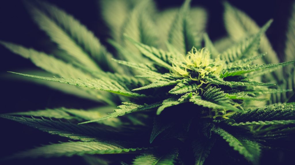 1308 Line Recreational Cannabis