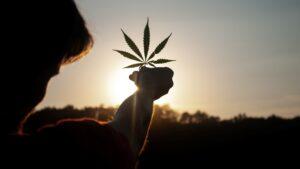 1436 Line Cannabis XGR