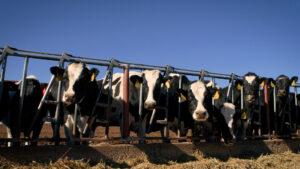 Clovis Dairy Master