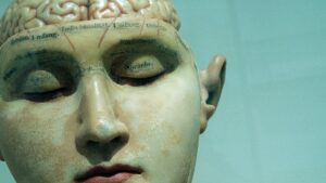 A medical bust of a head with labels on the eyes and forehead, and with brain exposed.