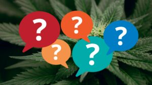 Composite of a cannabis plant with superimposed colorful question marks.