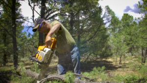A person chainsaws a tree body in the middle of a forest.