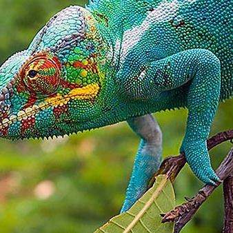 Madagascar Island of Marvels
