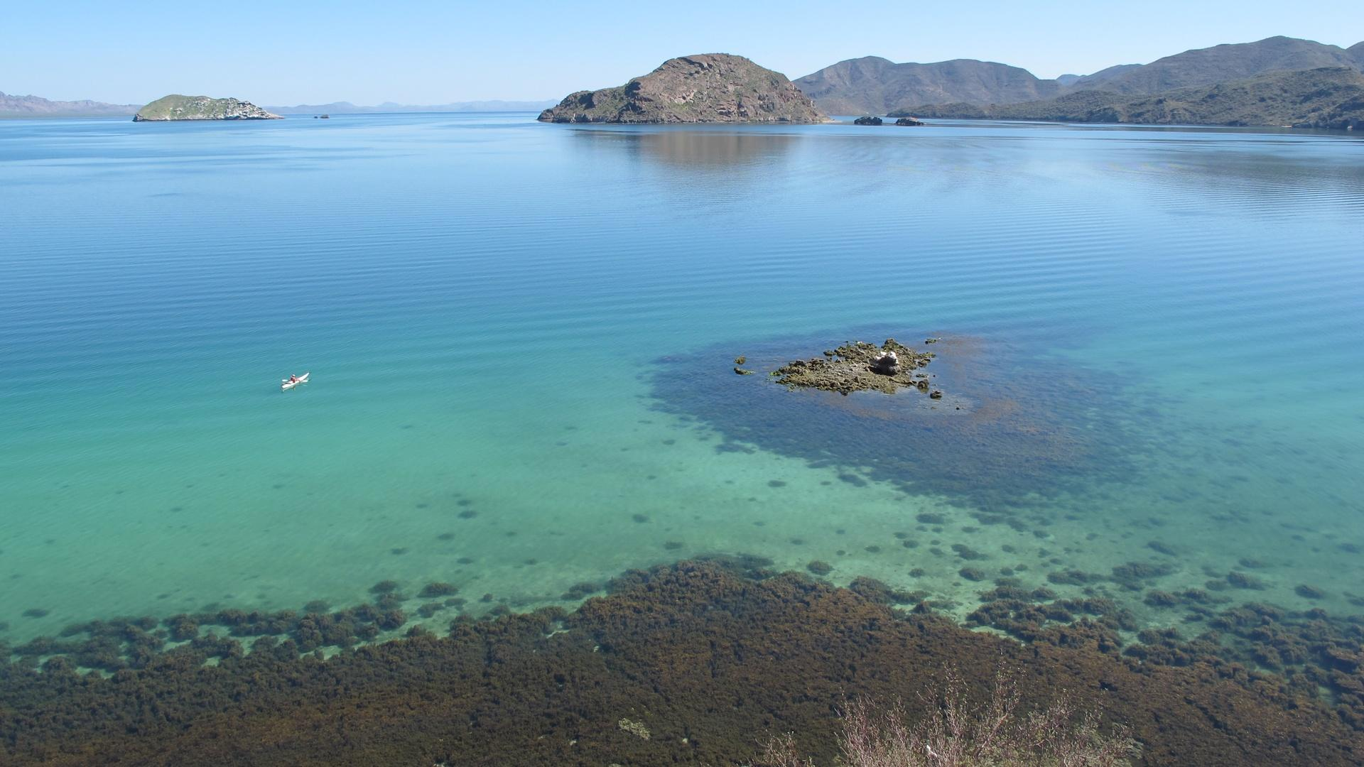 Saving Baja
