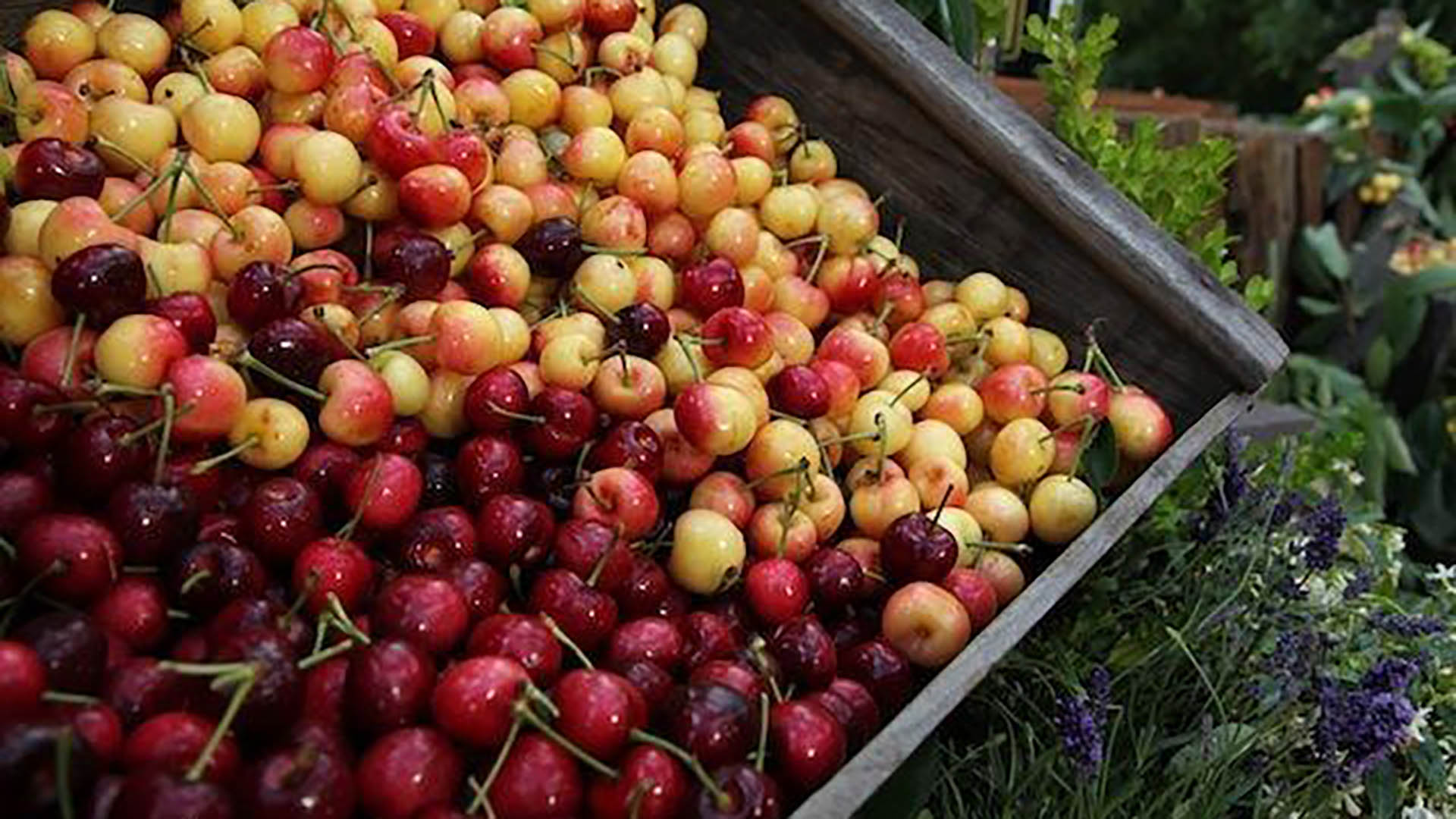 Fresh Cherry Recipies