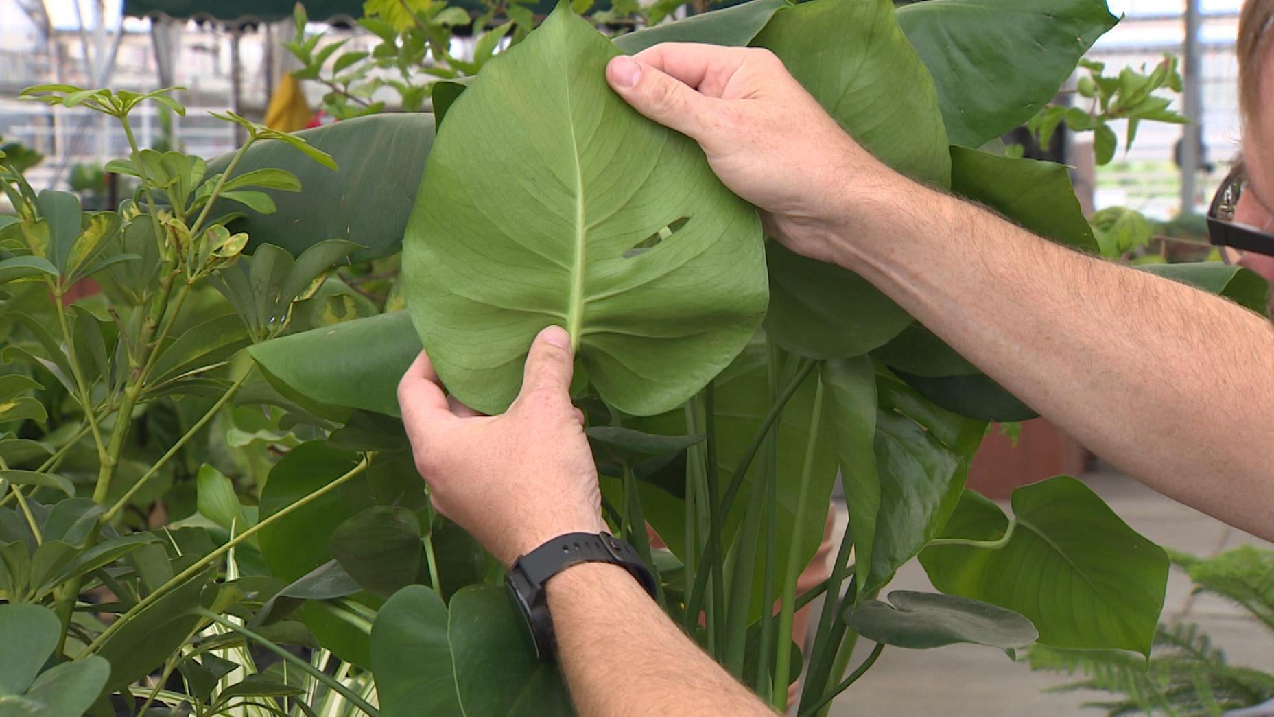 Backyard Farmer- Moving Plants Indoors for Winter